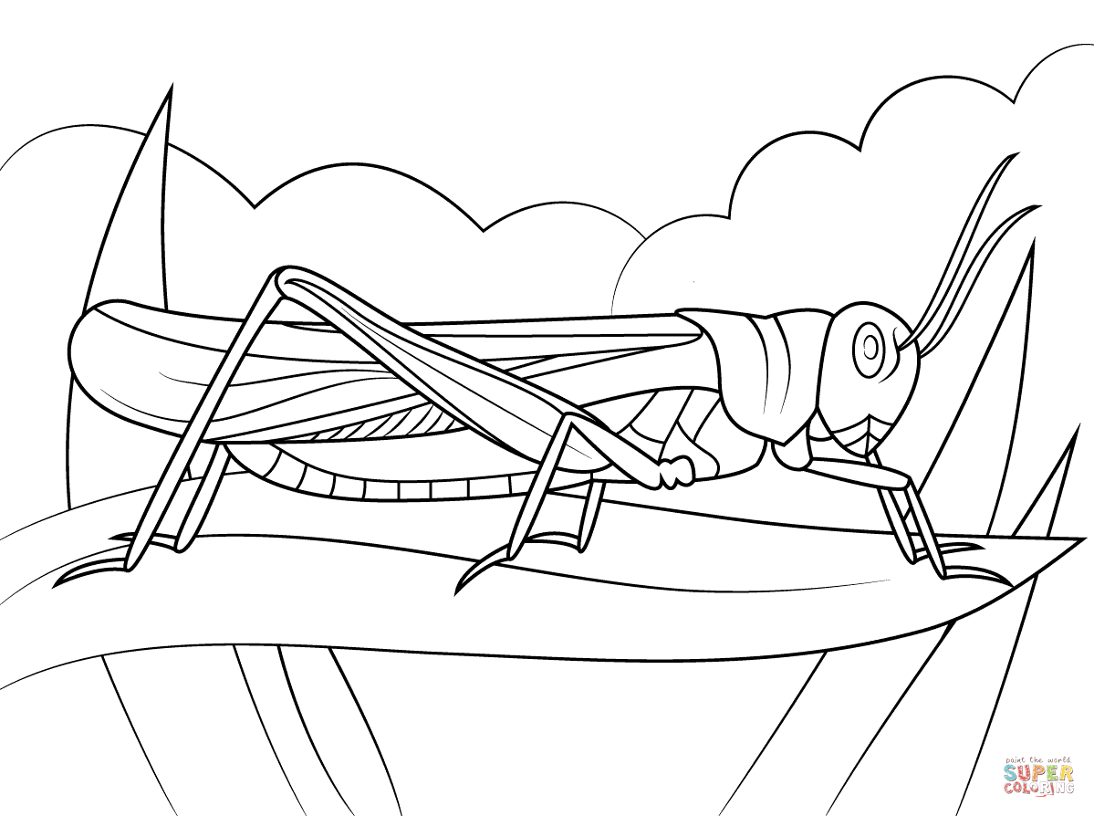 1199x894 Rocky Mountain Locust Coloring Page Free Printable Coloring Pages