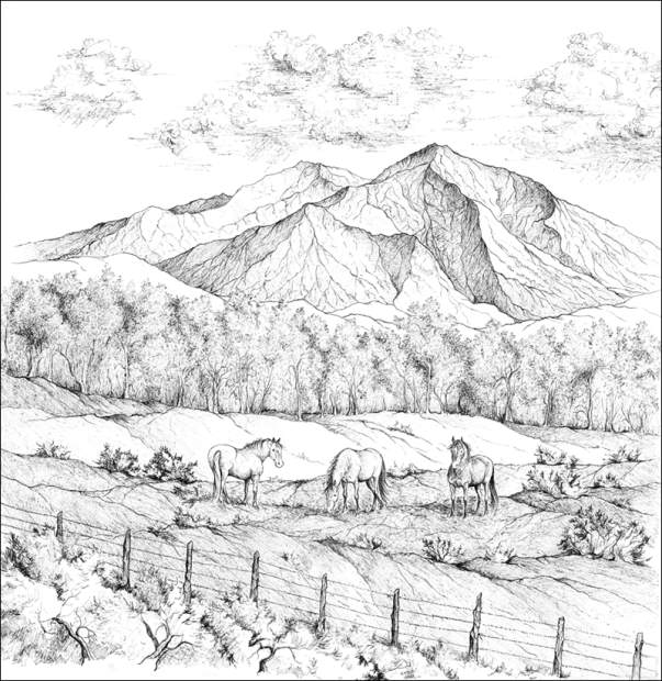 603x620 Rocky Mountain Coloring Book Includes Sopris