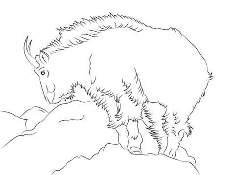 480x358 Rocky Mountain Goat Coloring Page Free Printable Coloring Pages