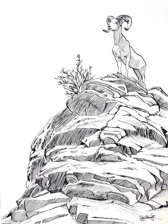 570x759 Bighorn Sheep Colorado Original Ink Drawing Inktober Rocky