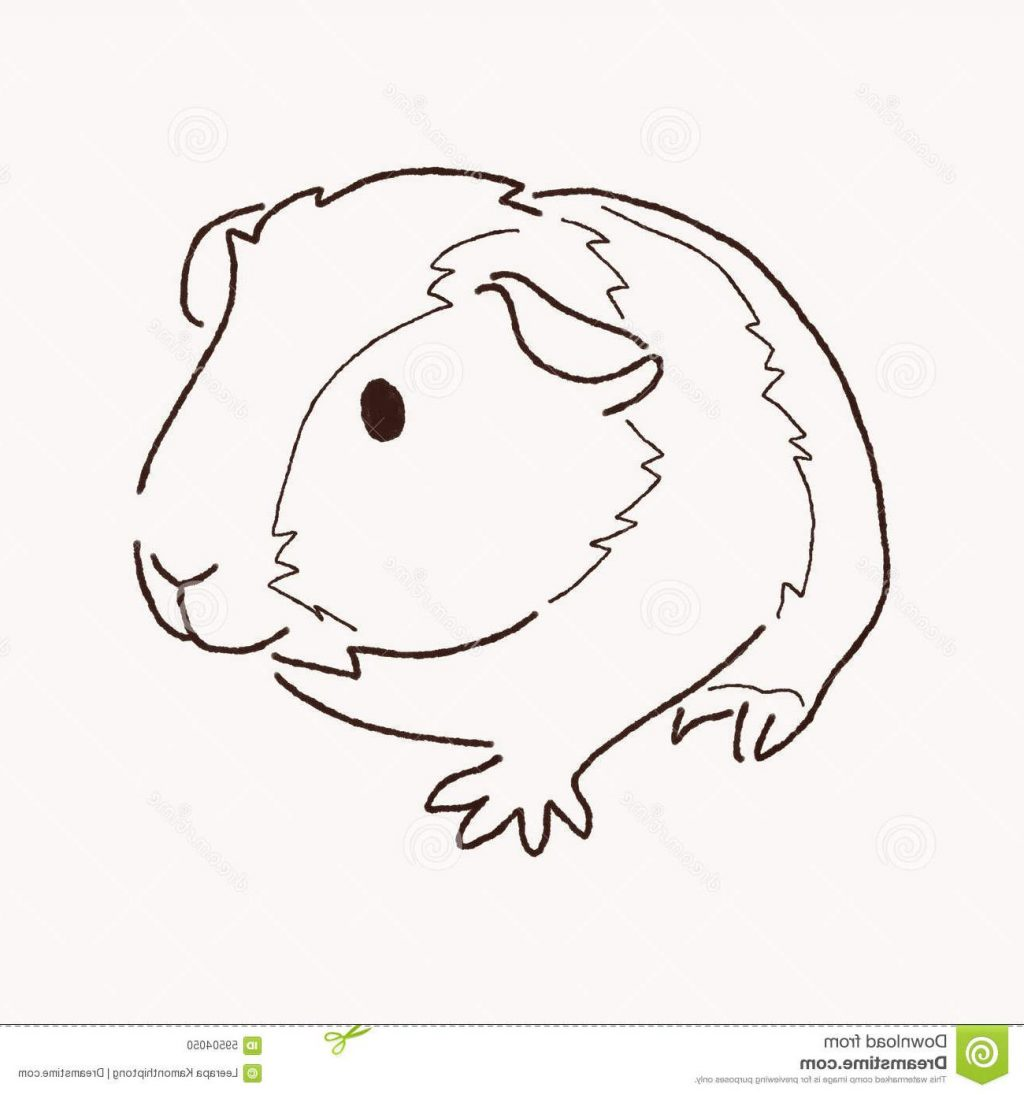 1024x1095 Best 15 Guinea Pig Clipart Black And White Drawing