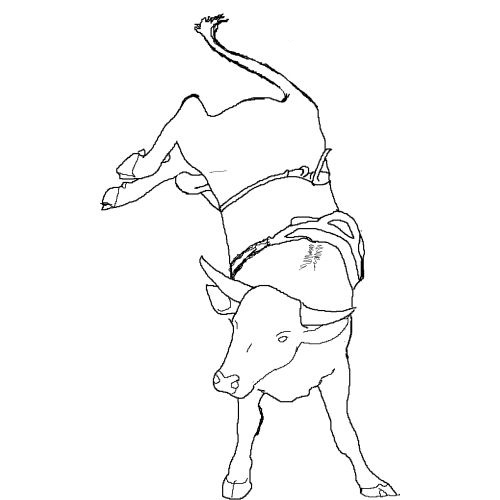 500x500 Bull Coloring Pages