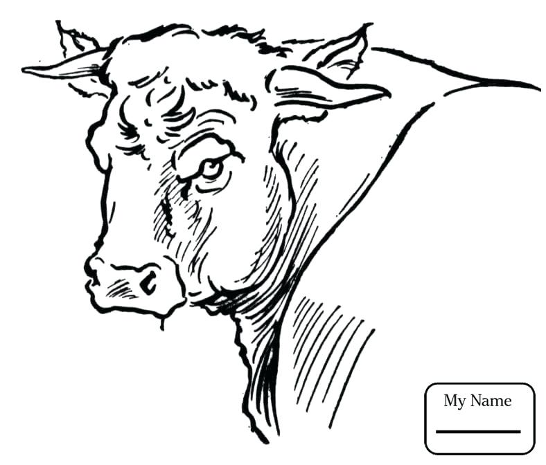 788x672 Coloring Pages Of Bulls Bulls Bucking Bull Mammals Coloring Pages