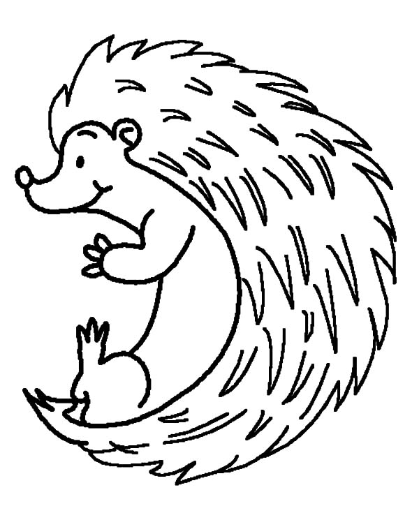 600x735 Drawing Hedgehog Coloring Pages Coloring Sun
