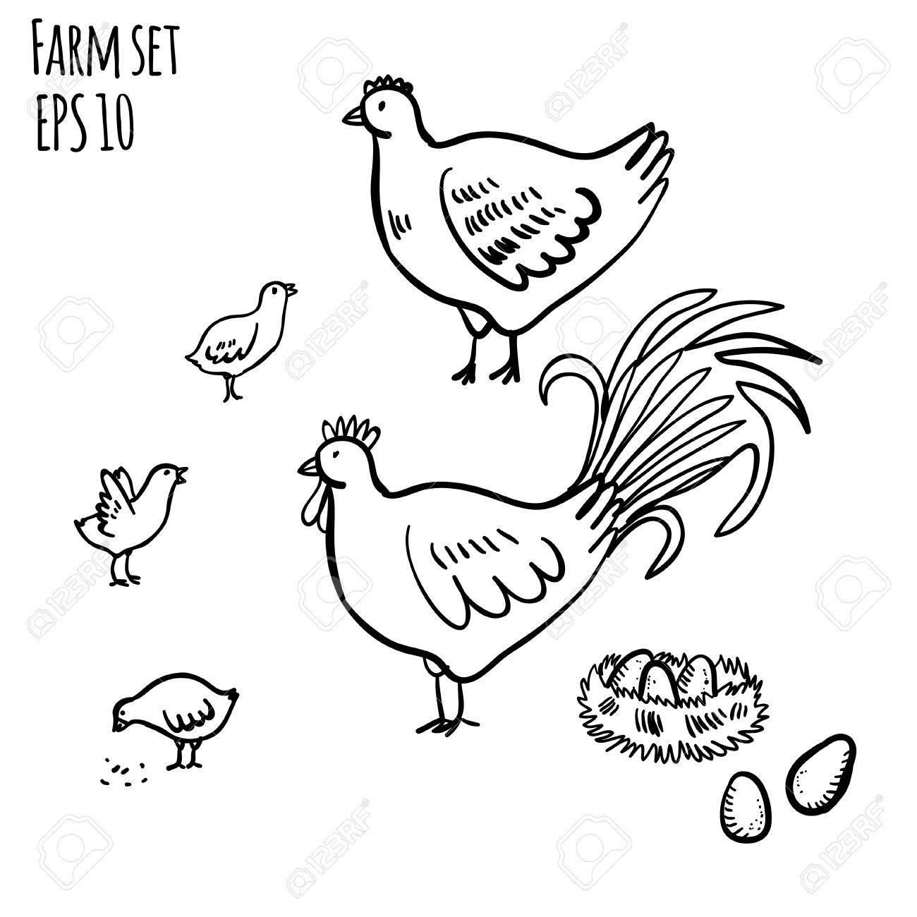 1300x1300 Vector Illustration Set With Rooster, Hen And Chicken. Handy