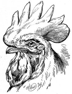 236x309 Rooster Portrait Stark And Bold, This Black And White Portrait