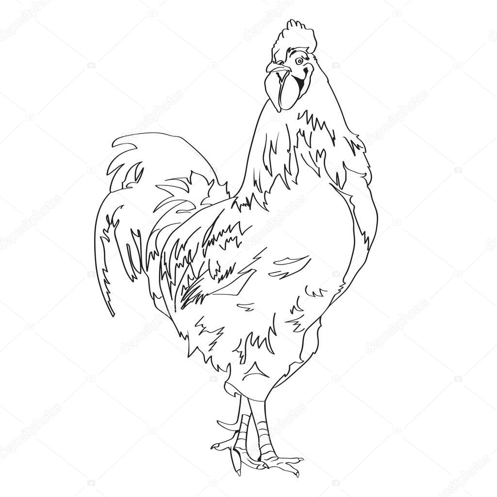 1024x1024 Sketch Drawing Of A Rooster 3 Stock Vector Irkasmorodina8