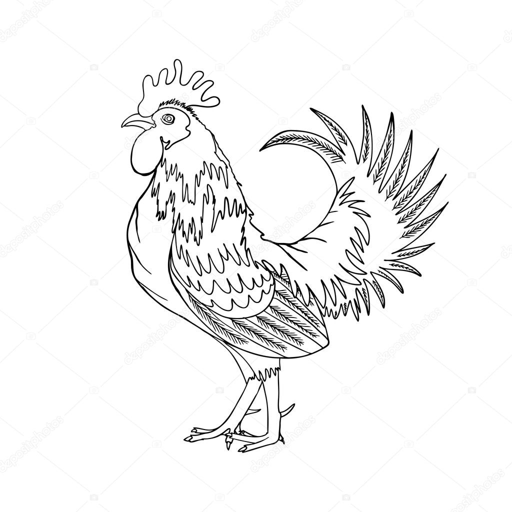 1024x1024 Drawing Cock Or Rooster Stock Vector Goldenshrimp