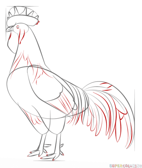 488x575 Drawn Rooster Line Drawing