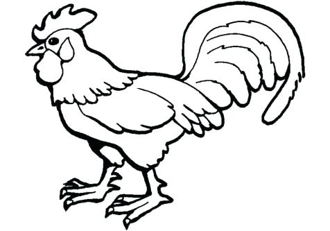 476x333 Rooster Coloring Page Drawings Of Roosters Free Rooster Coloring