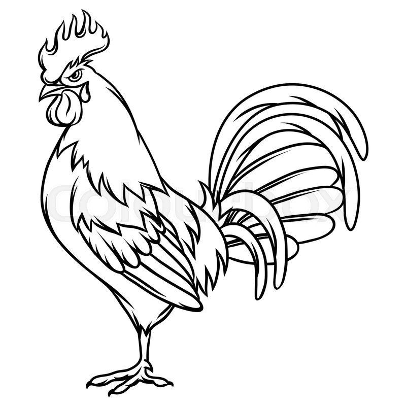800x800 Hand Drawn Illustration Of Black Rooster On White Background