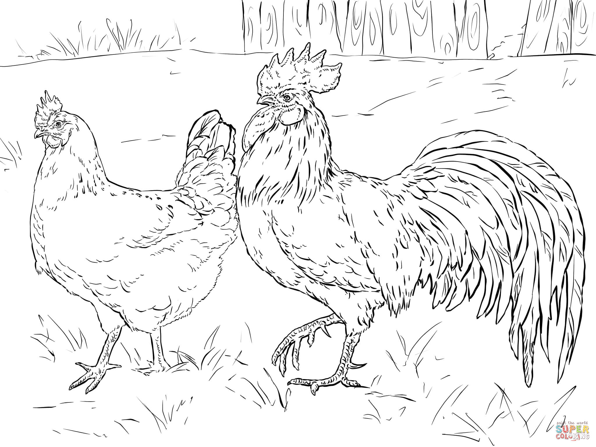 2048x1536 Hen And Rooster Coloring Page Free Printable Coloring Pages