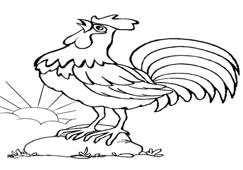 476x333 Rooster Coloring Pages Page Image Clipart Images