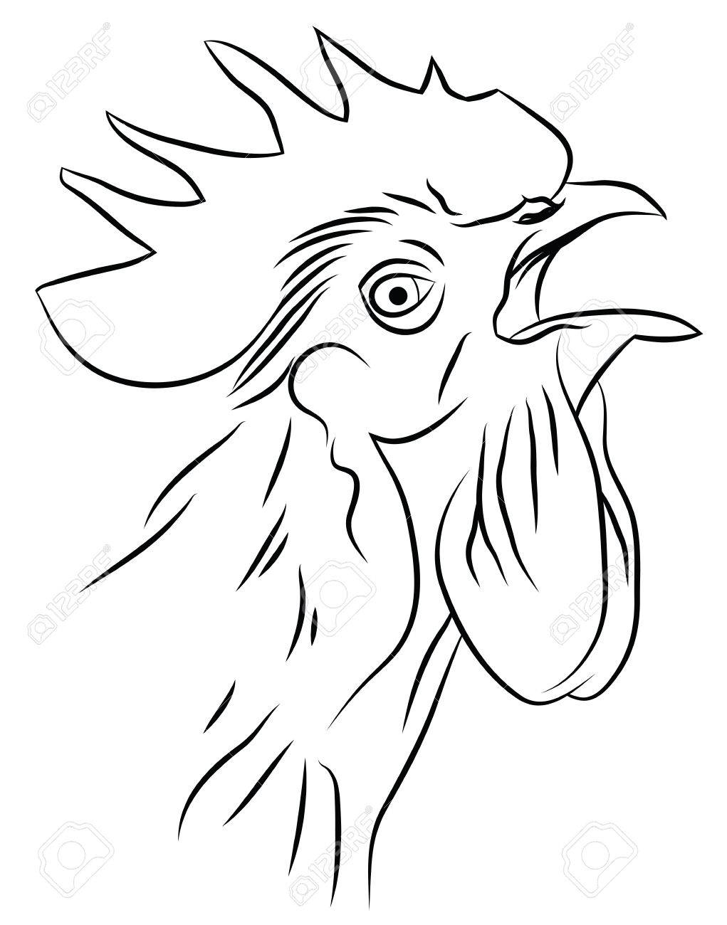 1021x1300 Sketch Of A Crowing Rooster Isolated On White Royalty Free