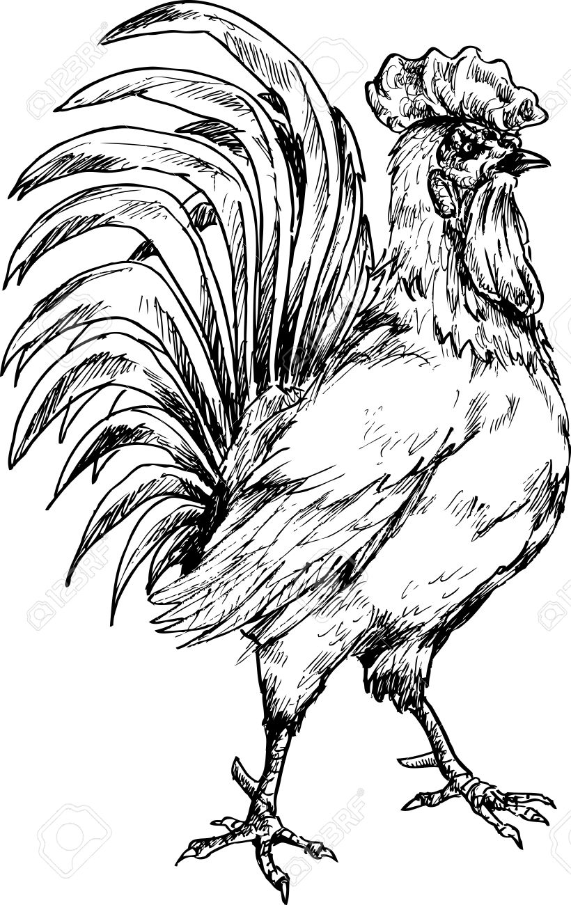 820x1300 Drawn Rooster