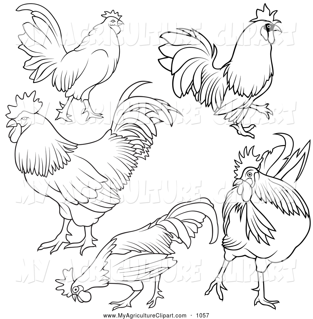 1024x1044 Image Result For Simple Chicken Template Fye Chicken Run 2017