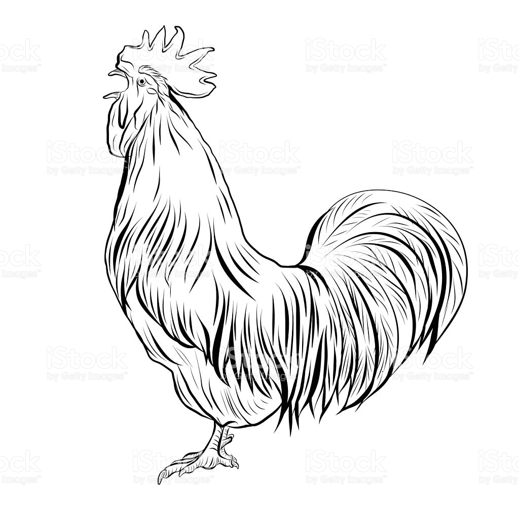 1024x1024 Drawn Rooster Hen