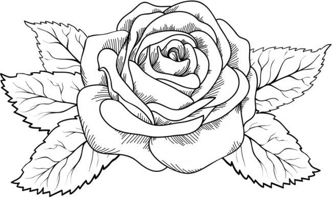 Rose And Rosary Drawing