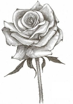 303x431 Full Flowering Rose Tattoo Design Alex's Black And White Art