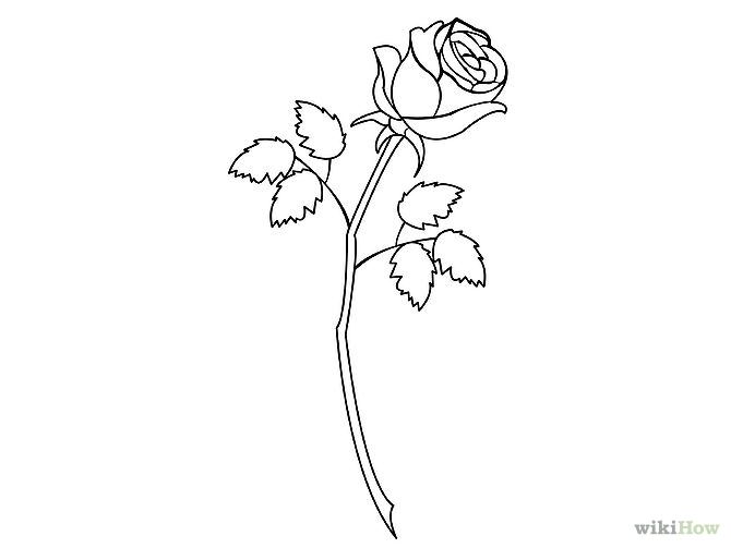 670x503 Gallery For Gt How To Draw Rose Step By Step Floral And Bouquet