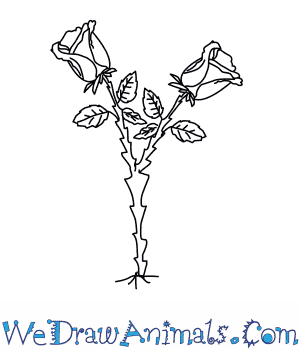 300x350 How To Draw A Rose Tree