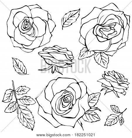 450x470 Sketch Rose Flower Set. Pencil Vector Amp Photo Bigstock