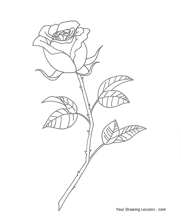 600x741 How To Draw Roses This Tutorial Is On How To Draw A Rose