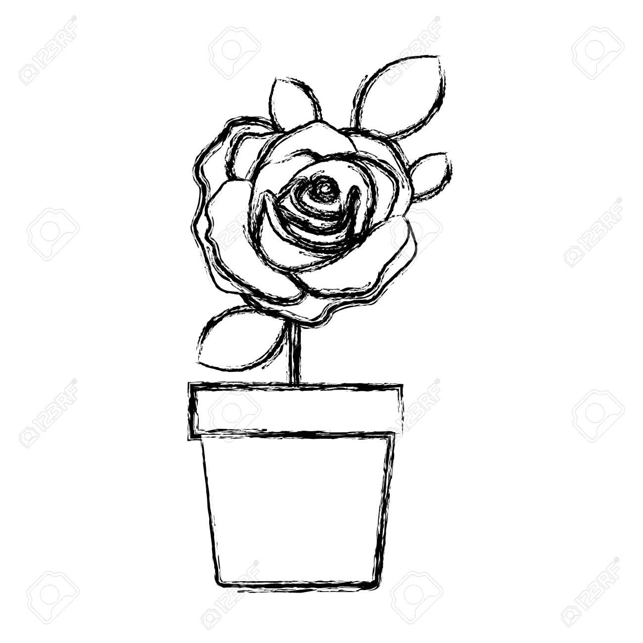 1300x1300 Blurred Silhouette Flowered Rose With Leaves And Stem In Flowerpot