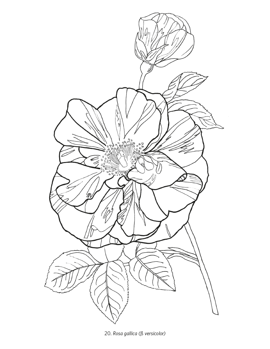 Awesome Botany Coloring Book Gallery - New Coloring Pages ...