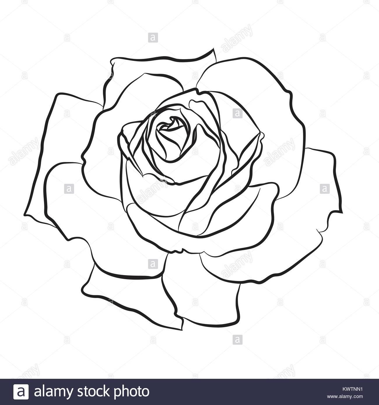 1300x1390 Single Flower Rose Bud Silhouette Stock Photos Amp Single Flower