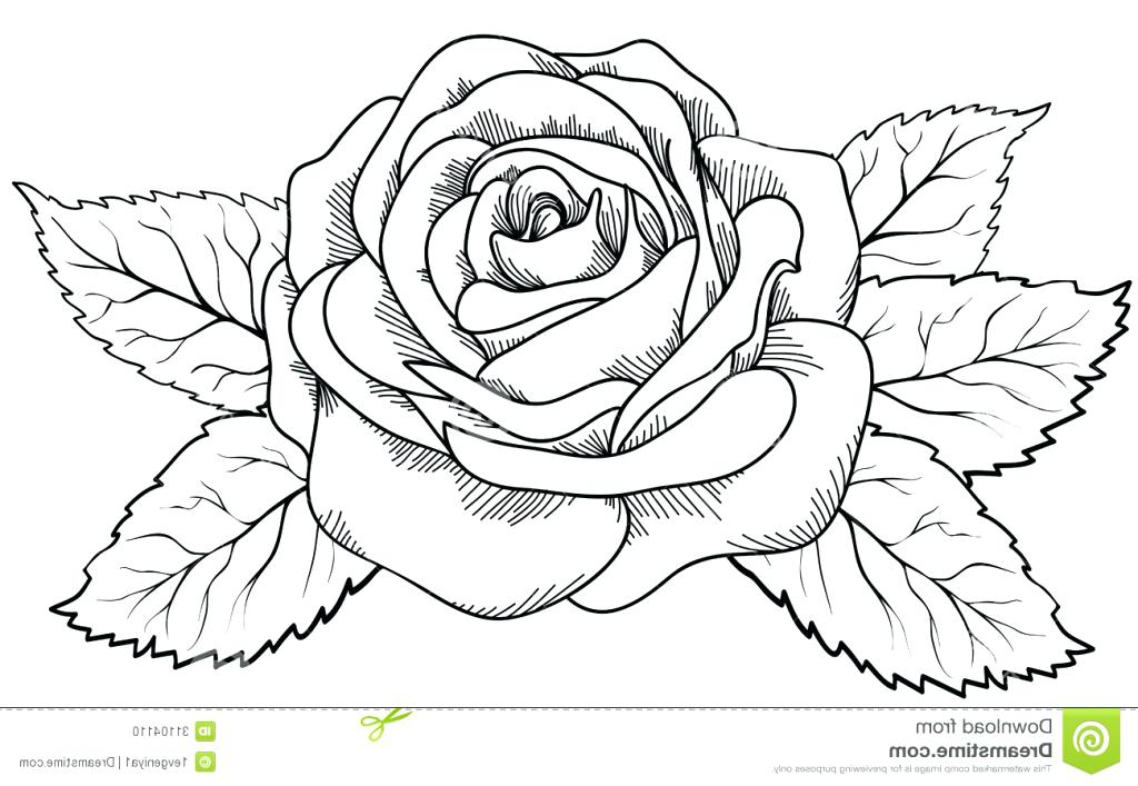 1024x707 flowers drawing drawing of a flower 6 nice design draw flower step