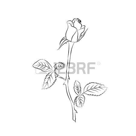 Rose Bud Drawing At Getdrawings Com Free For Personal Use Rose Bud