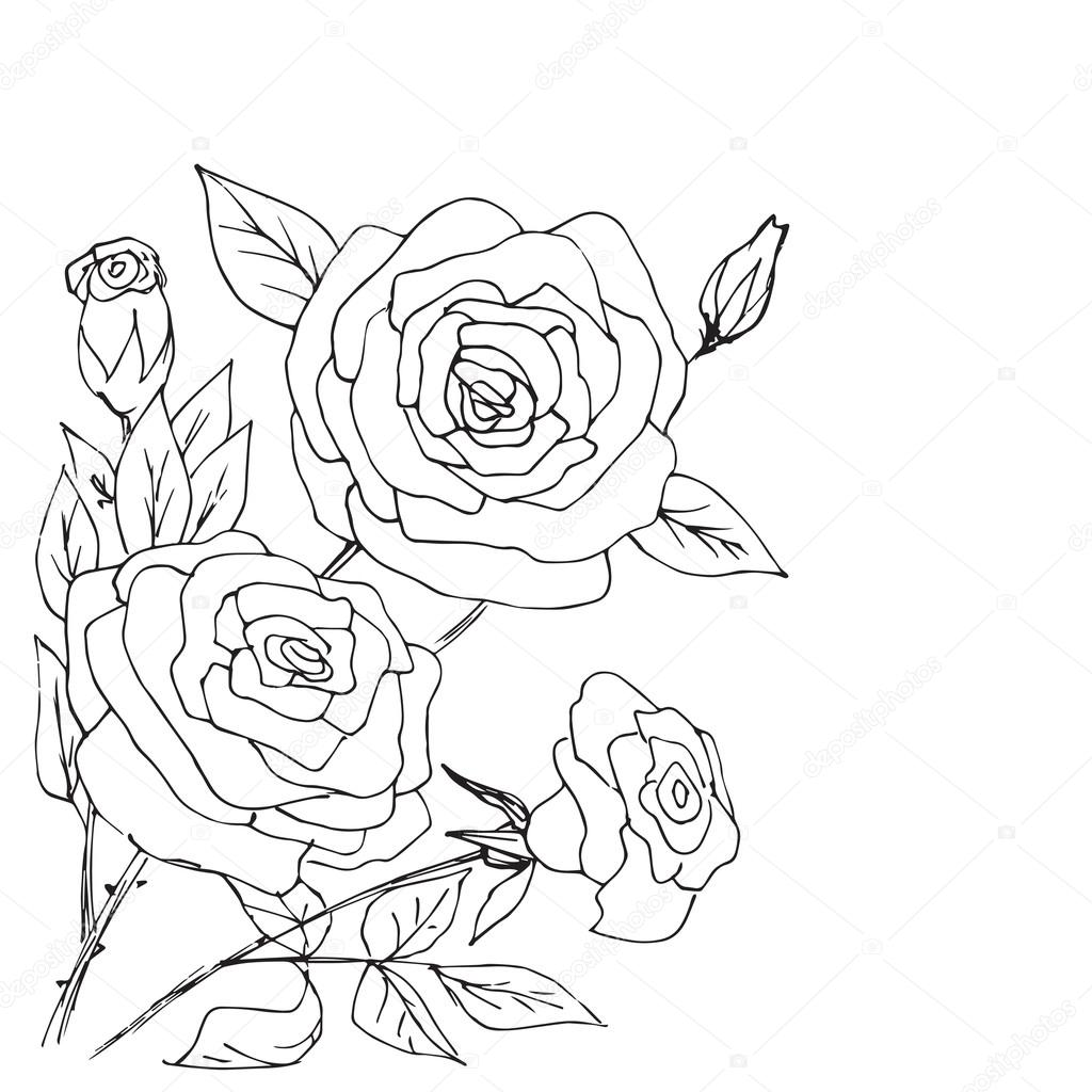 1024x1024 Hand Drawn Composition Of Roses, Buds And Leafs Stock Vector