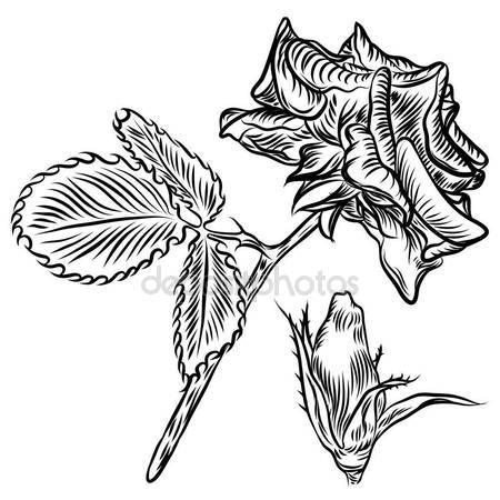 450x450 Rose Hand Drawing Set Spring Buds Black Rose Leaf Design Stock