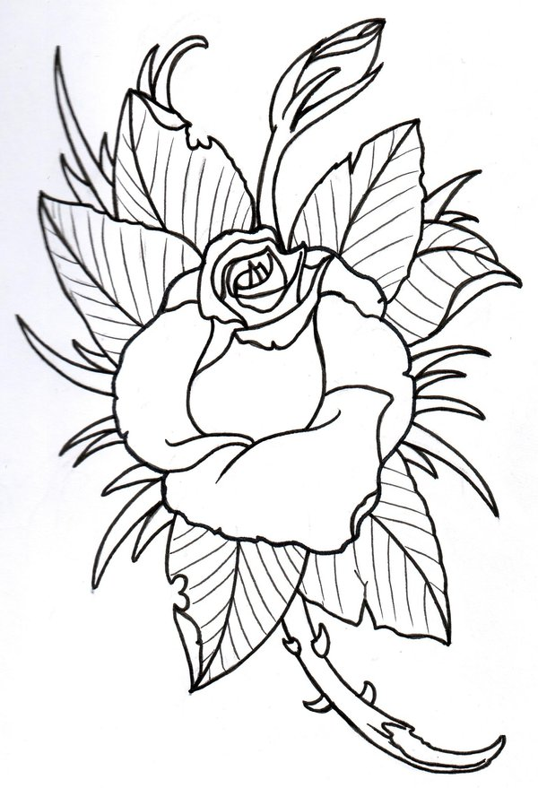 600x879 Rose Outline 2 By Vikingtattoo