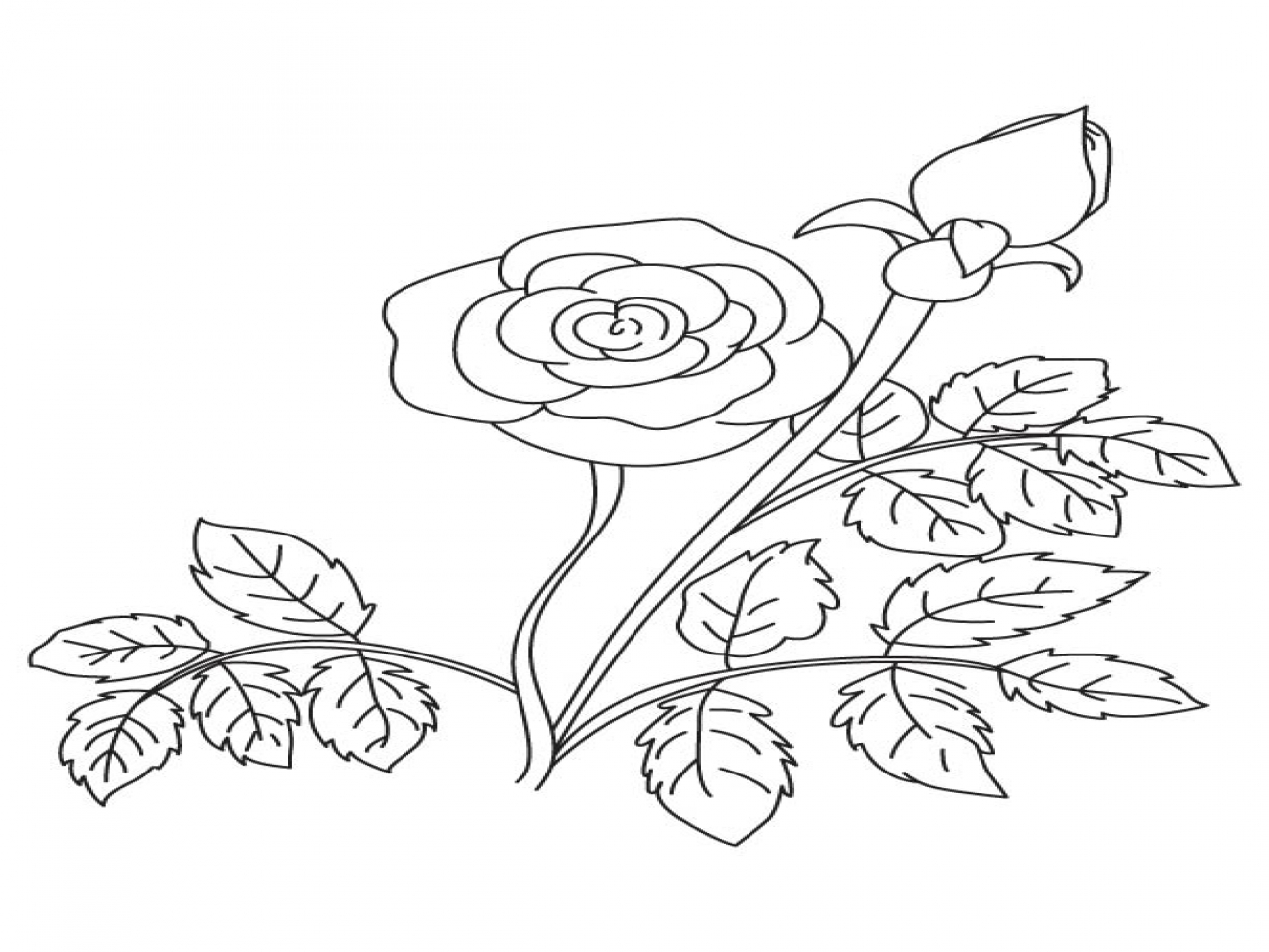 1280x960 Bud Coloring Pages Rose And Page For Kids Best