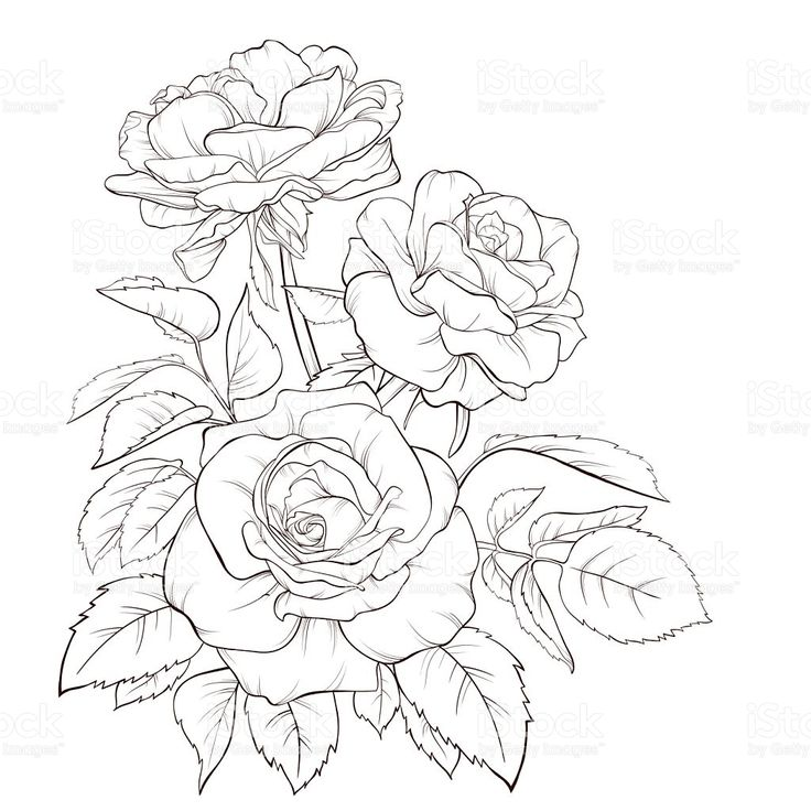 Rose Bunch Drawing