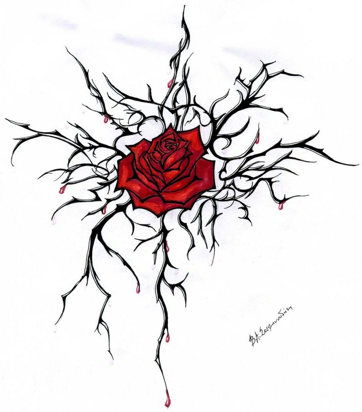736x839 Photos Sketches Of Roses With Thorns,