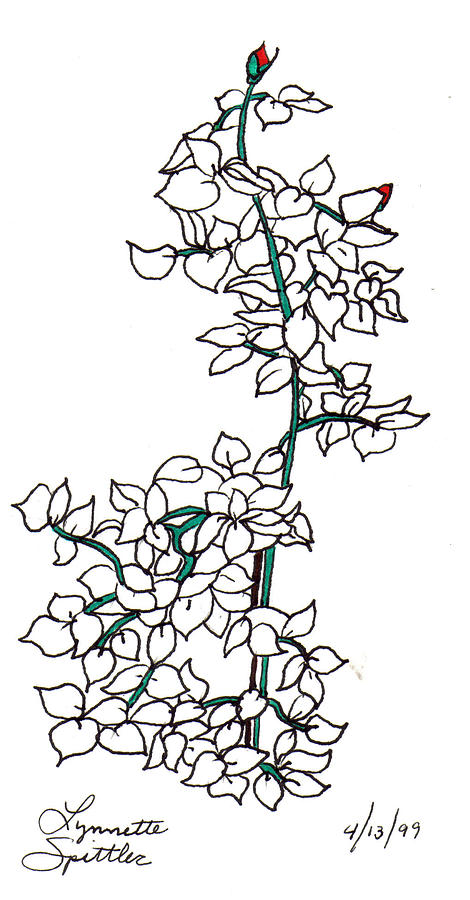 470x900 Rose Bush Drawing By Lynnette Jones