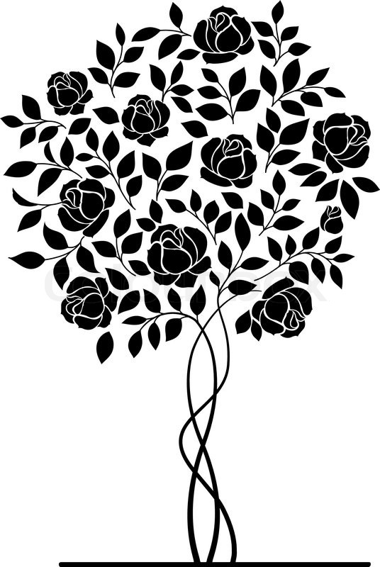 536x800 Rose Garden Bush Isolated Over White Background. Vector