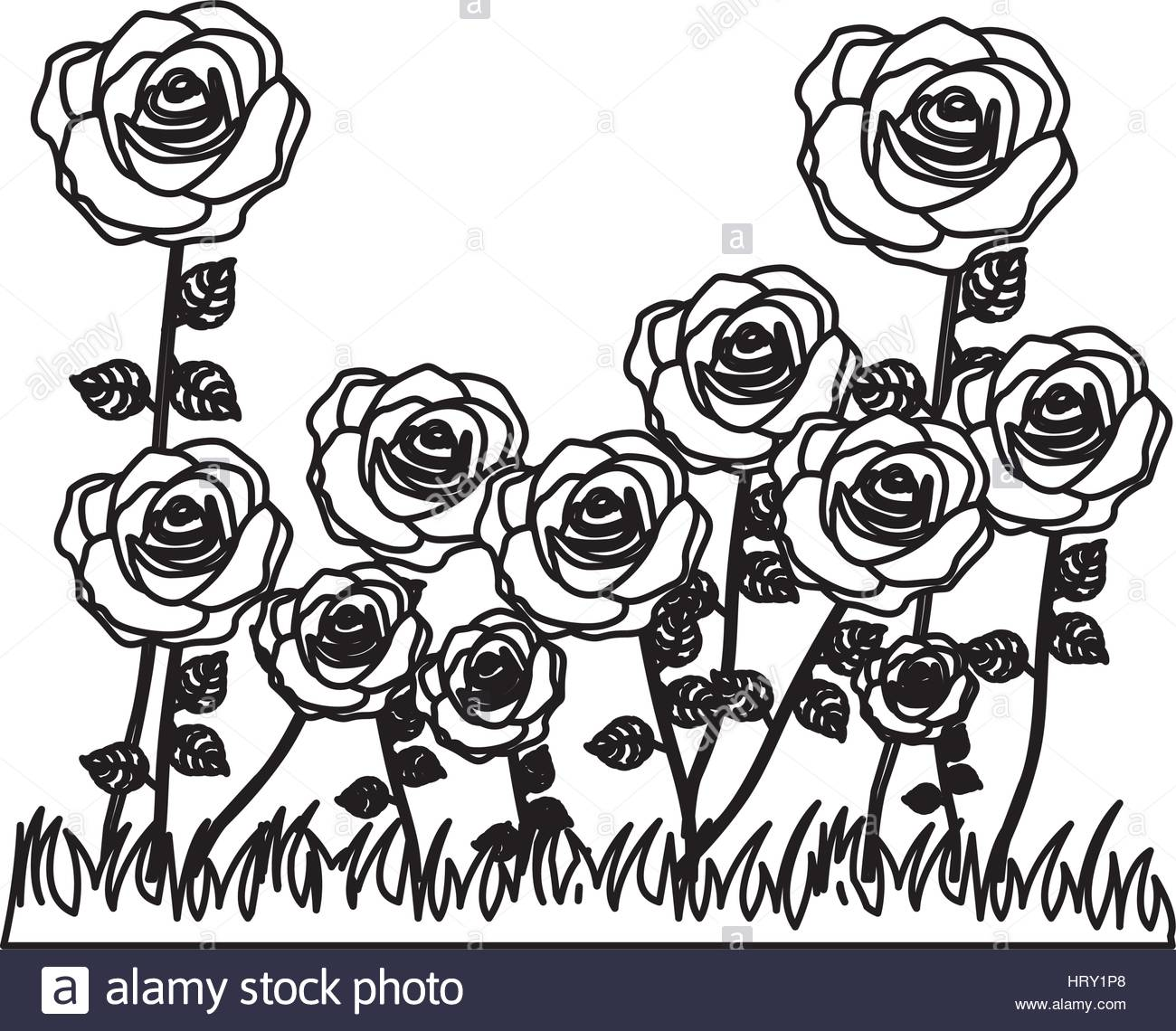 1300x1140 Silhouette Rose Bush In Pasture Floral Design Stock Vector Art