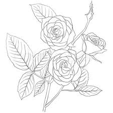 225x225 Simple Rose Bush Stem Drawing