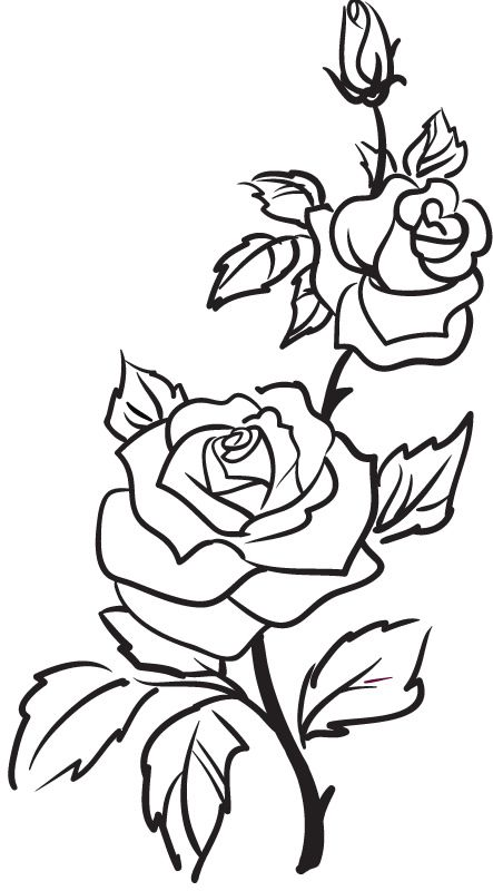 443x800 Simple Rose Outline Drawing