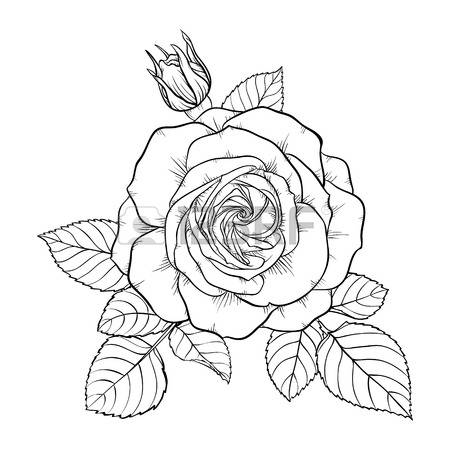 450x450 Drawn Bouquet Rose Bush