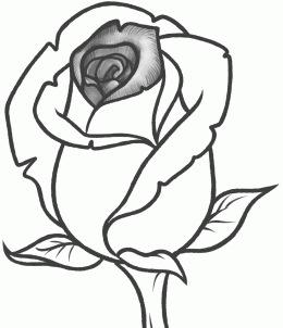 260x302 How To Sketch A Rose Recipe Rose Buds, Clear Stamps And Sketches