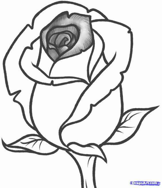 564x655 How To Draw A Rose Bud, Rose Bud Step 9 Sketching Flowers
