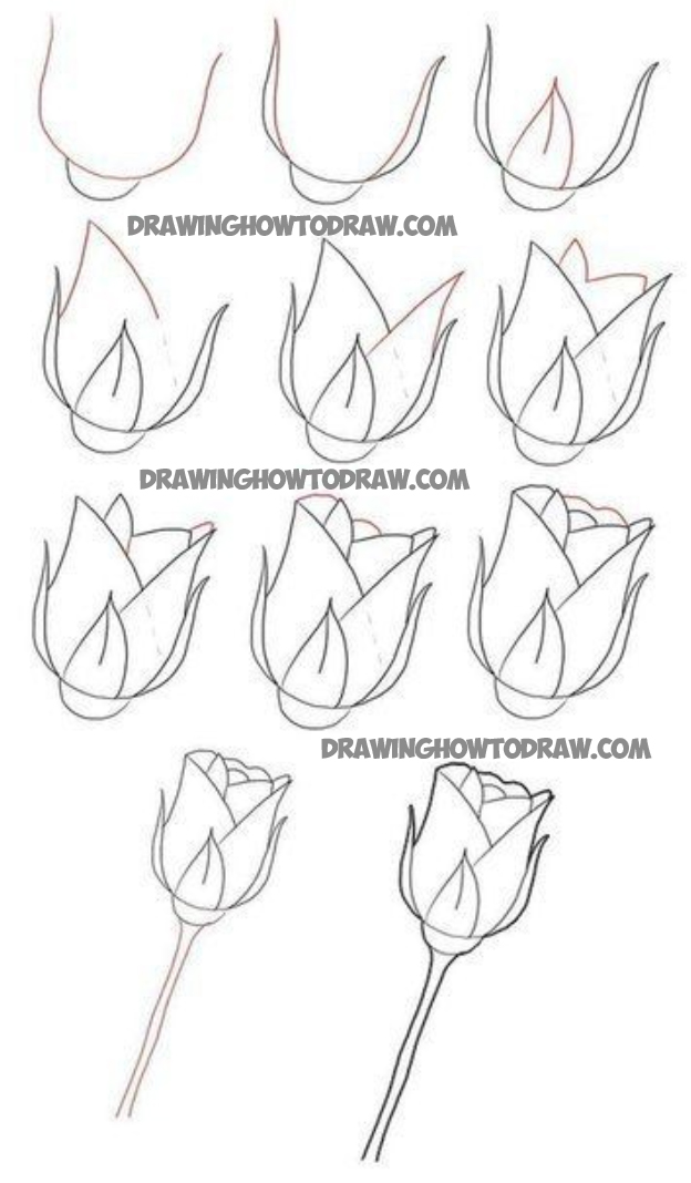 624x1068 How To Draw Long Stem Roses Drawing Tutorial For Valentines Day