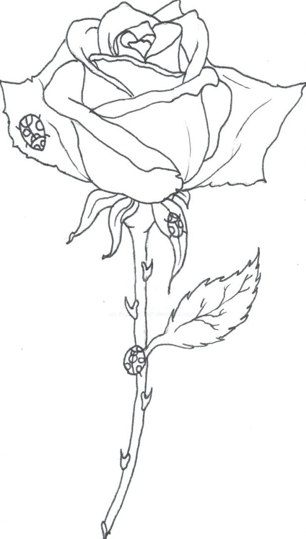 618x1088 Images For Roses Drawings Outlines 27 Marvellous Rose Drawing