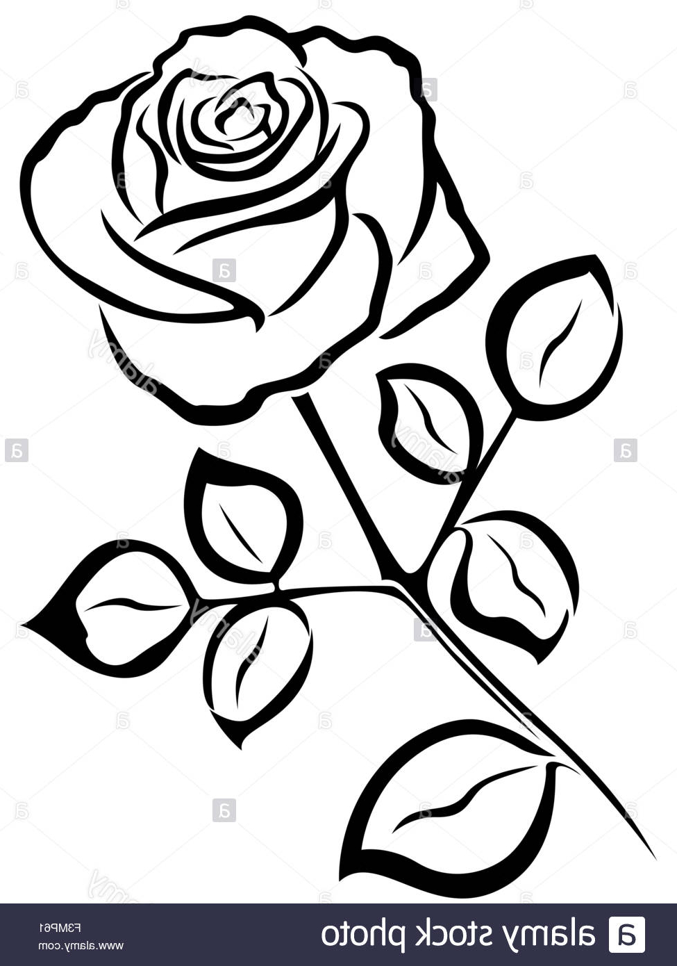 Rose drawing black and white at getdrawings free for personal 975x1390 rose flower black and white drawing black vector outline of single mightylinksfo