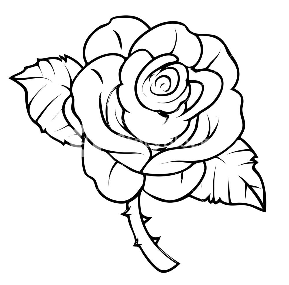 1000x987 Rose Drawing Royalty Free Stock Image